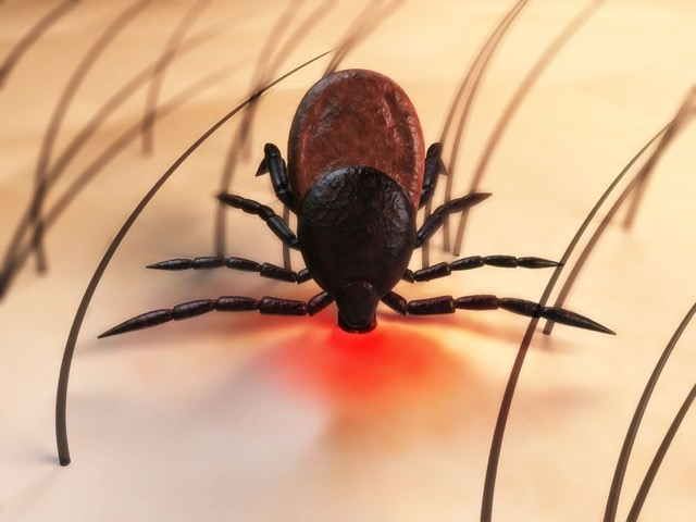 Ticks – Avoid and Eliminate Those Nasty Buggers With Ease