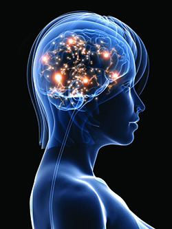 Alzheimers Disease Brain Aging - brendawatson.com