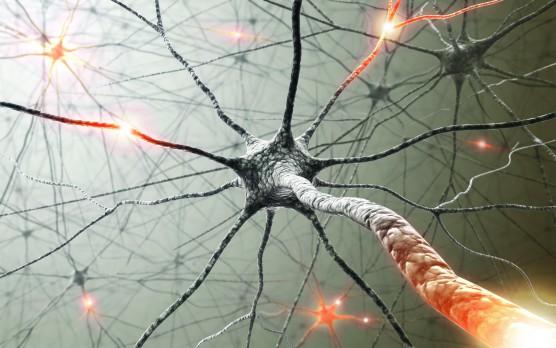 anxiety neuron