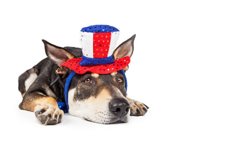 How to Calm Dog Anxiety This Fourth of July