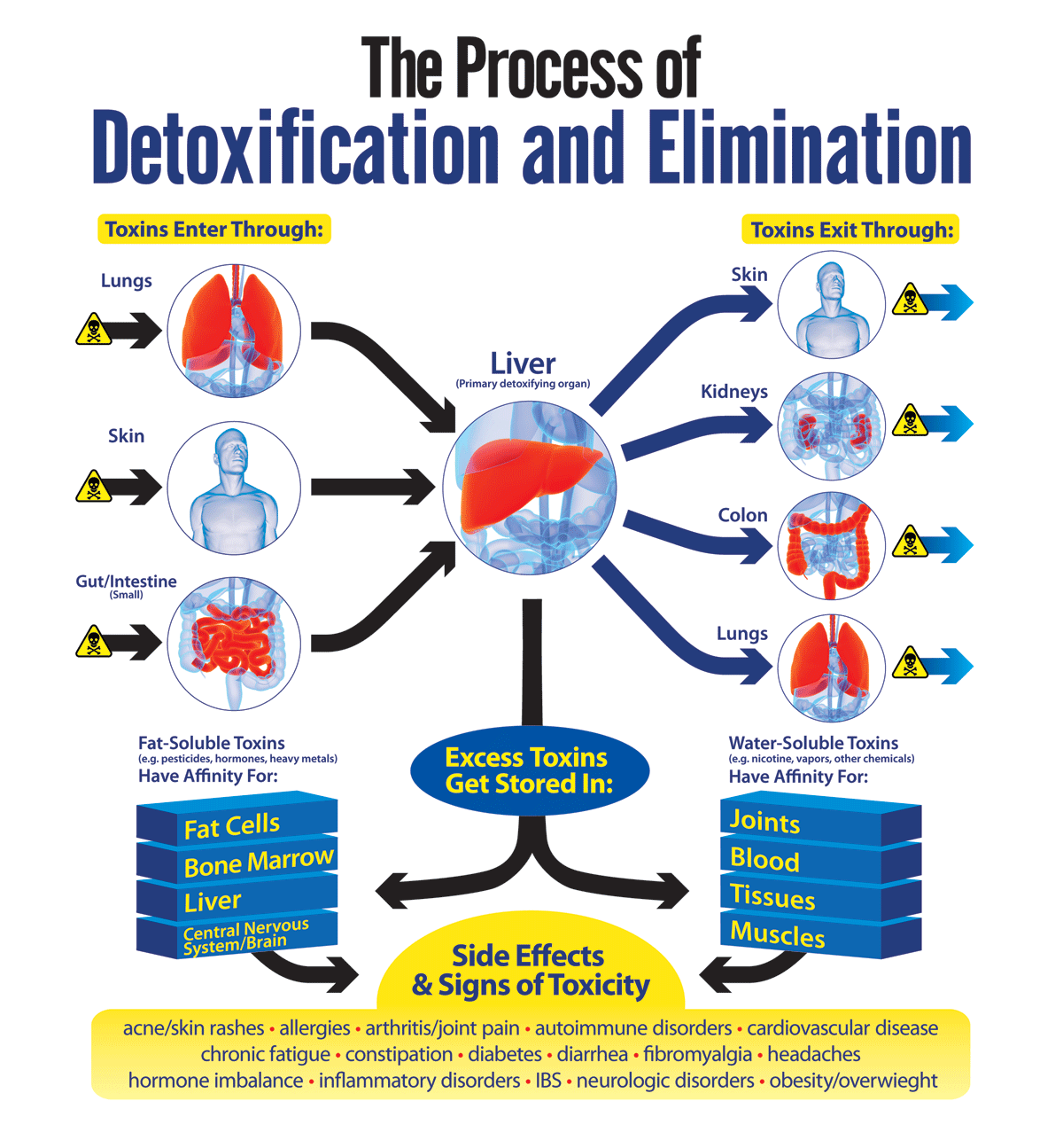 The Process of Detoxification and Elimination ...