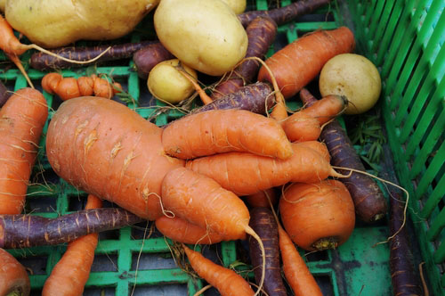 Fall for Ugly Veggies!